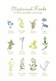 medicinal-herbs-poster-01